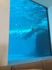 イルカの見えるレストラン
