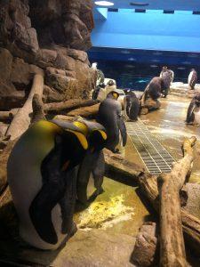 海響館ペンギン