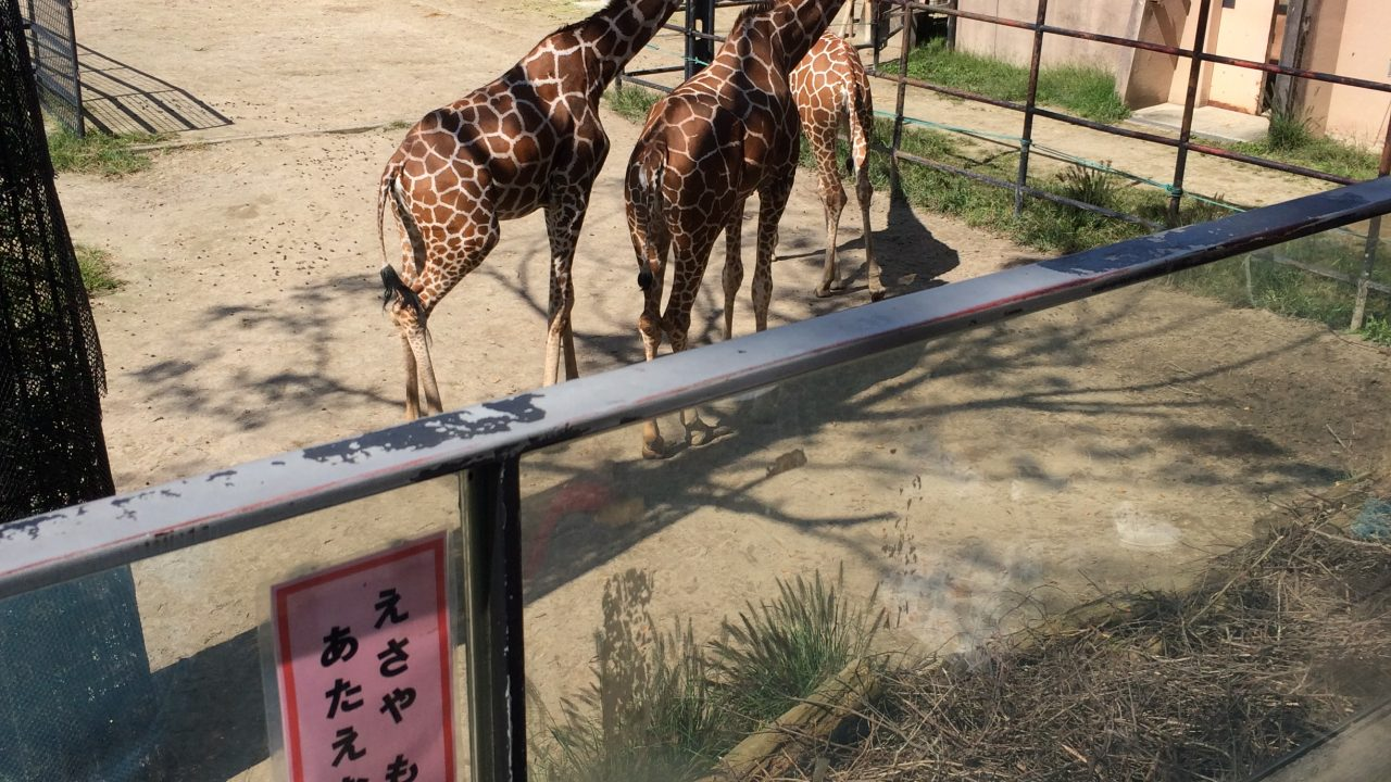 安佐動物公園 きりん